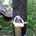 Талисман лесовичок